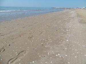 Union Lido La spiaggia